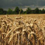 Subsidios en el agro colombiano: US$191.200 millones