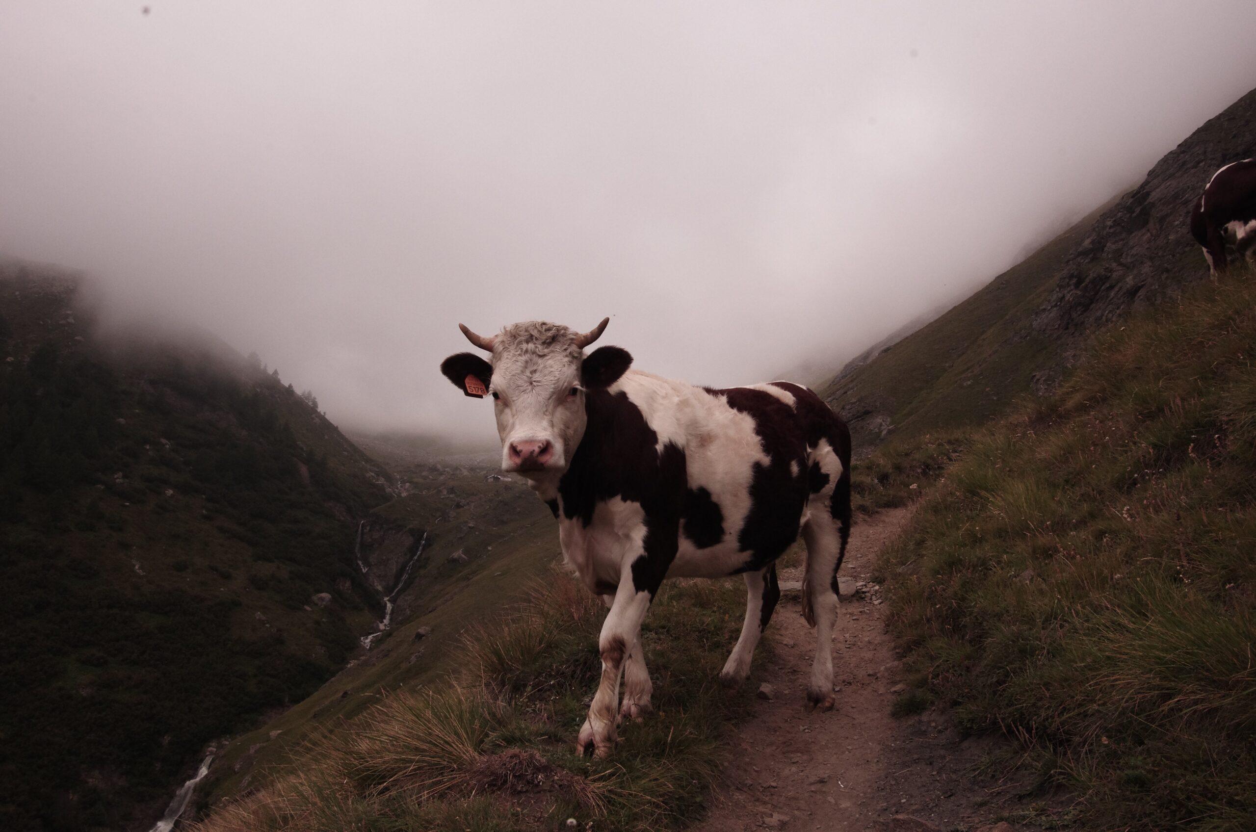 La industria láctea en Colombia
