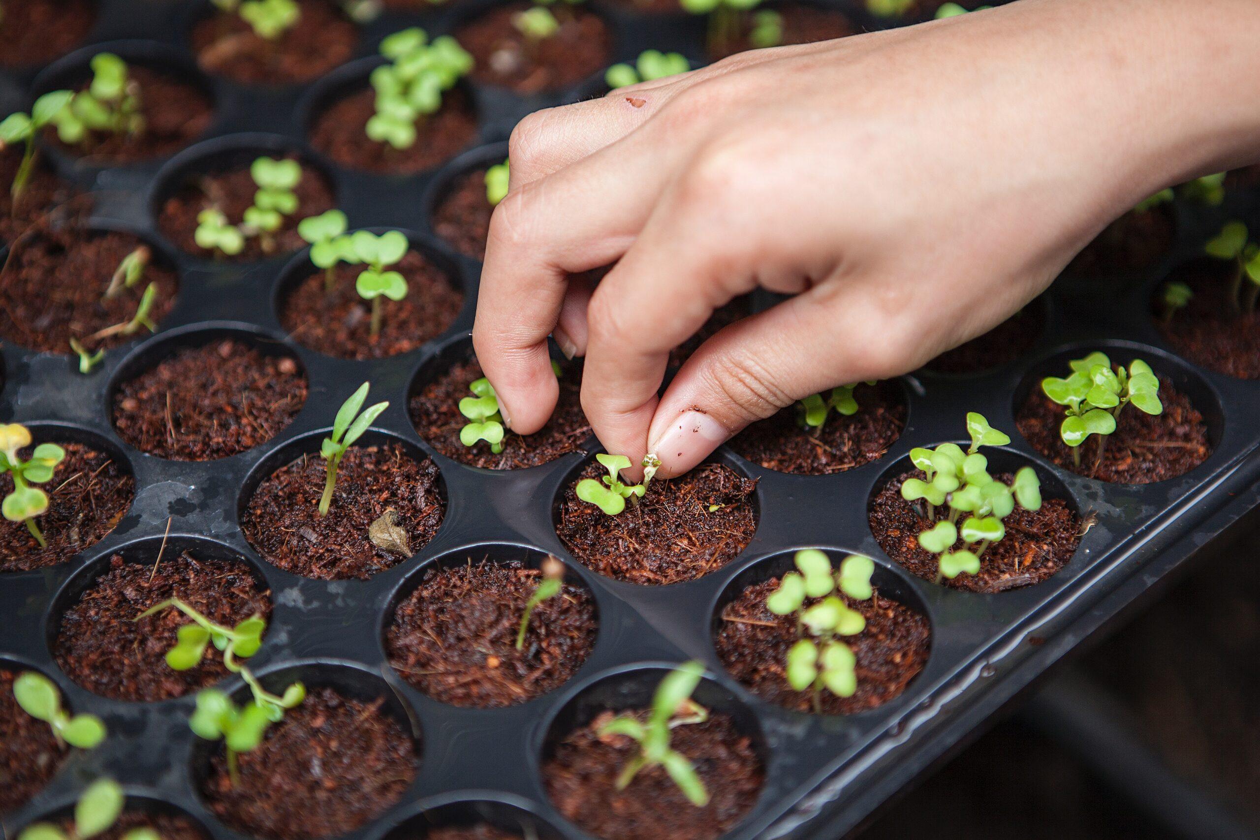 Los beneficios de la agricultura orgánica