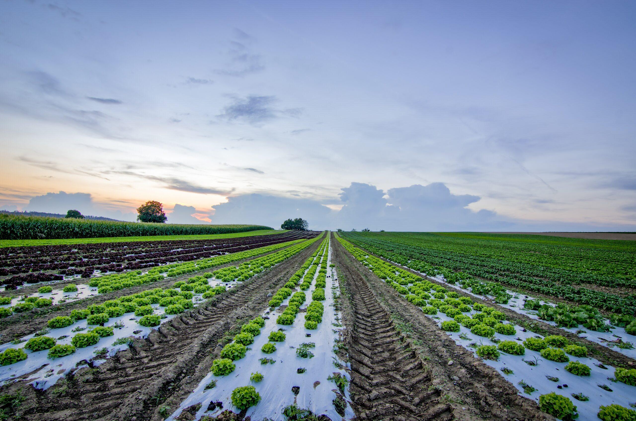 Glifosato, un herbicida de amplio espectro en la política